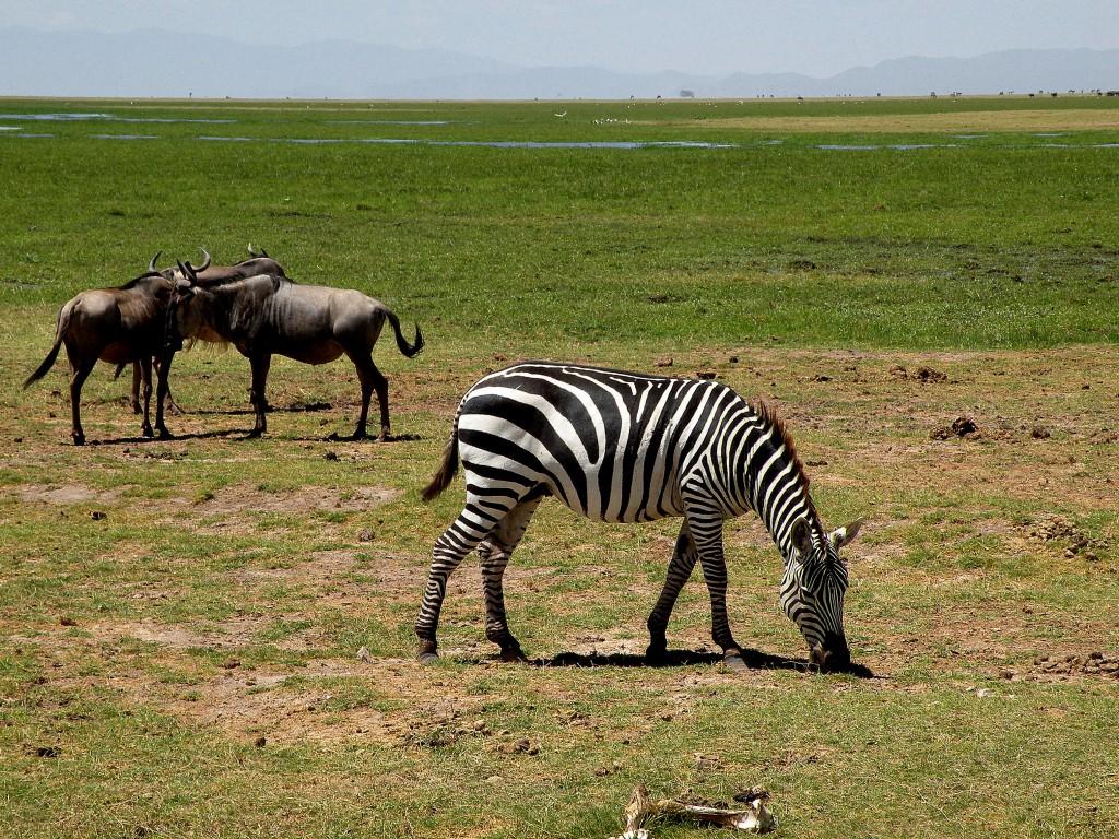 Zdjęcia: Amboseli, płd Kenia, Na safari, KENIA
