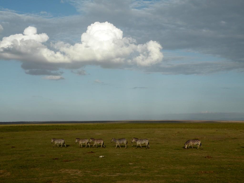 Zdjęcia: Amboseli, płd Kenia , Spacer pod chmurką, KENIA