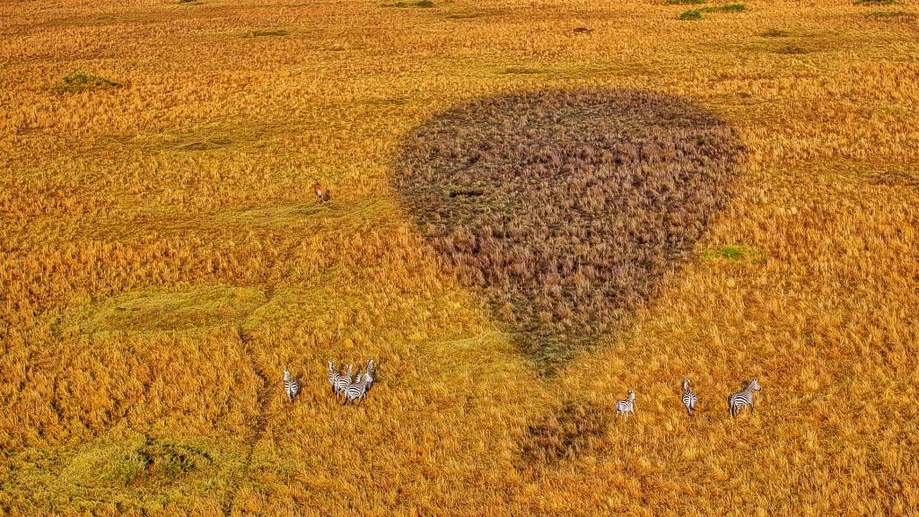 Zdjęcia: Mara Triangle, Masai Mara, Zebry i balon, KENIA