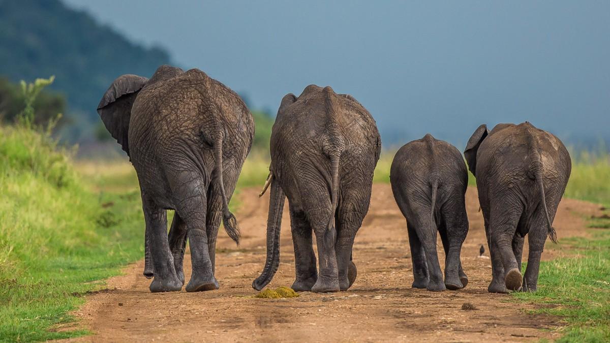 Zdjęcia: Mara Triangle, Masai Mara, Koniec pokazów - wracamy do domu!, KENIA