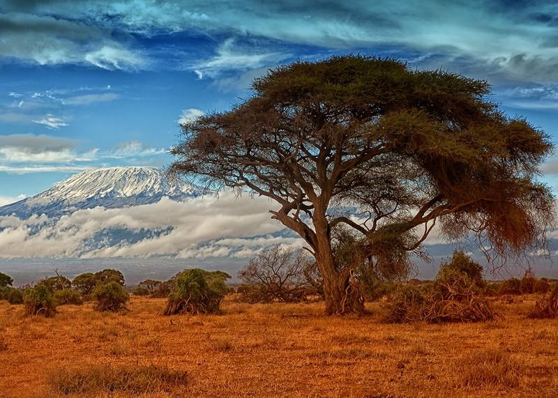 Zdjęcia: Amboseli, Amboseli, Amboseli i Kilimandzaro, KENIA
