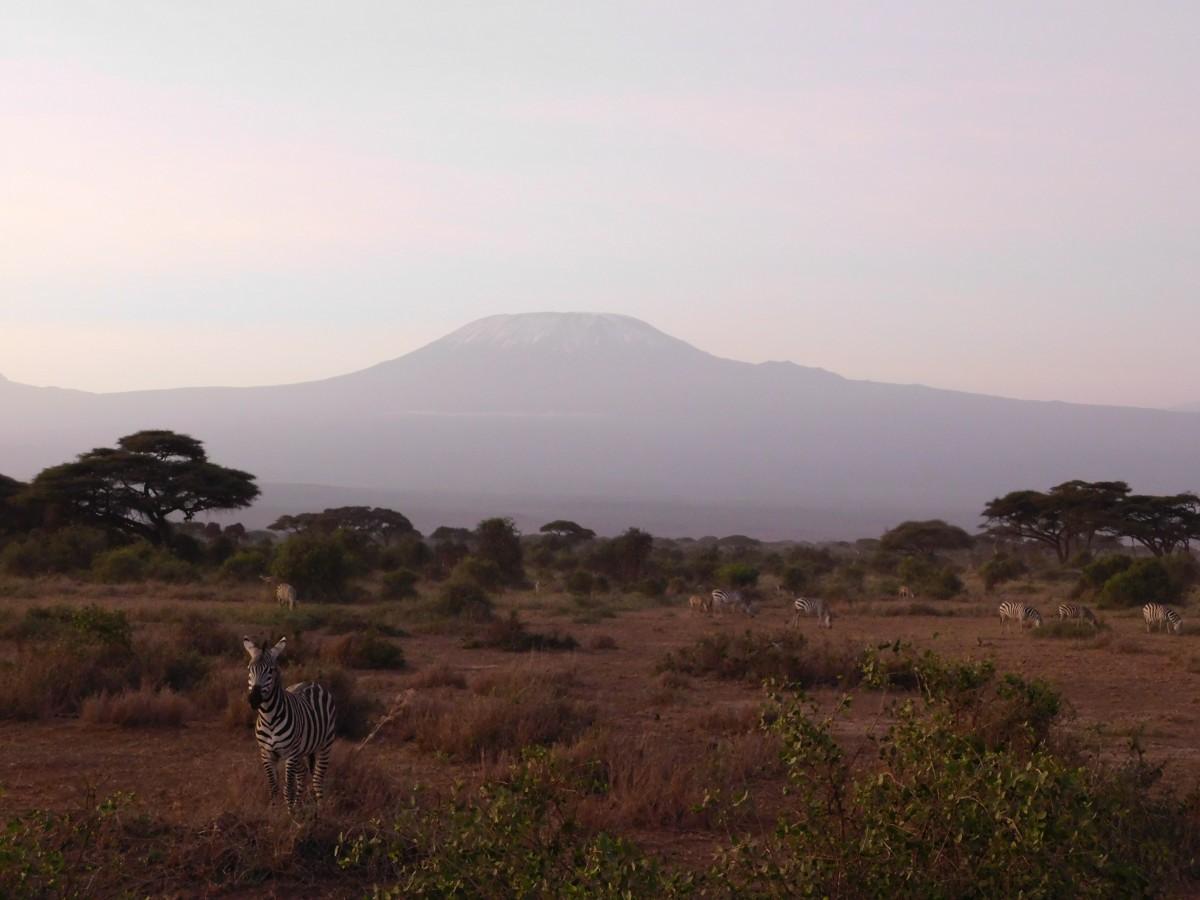 Zdjęcia: Park Norodowy, Amboseli , Magiczne Kilimandżaro, KENIA