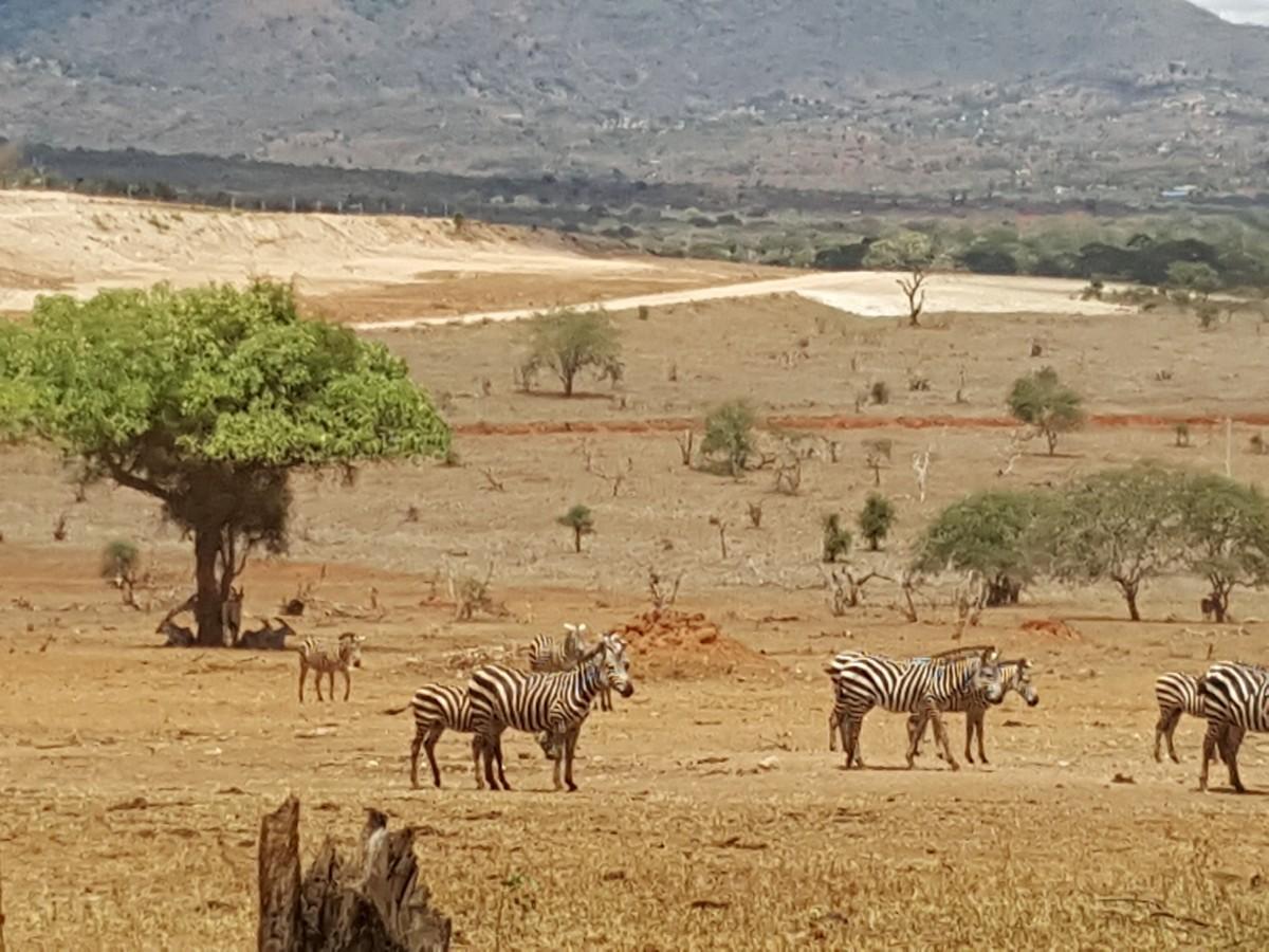 Zdjęcia: Tsavo National Park, Mombasa, safari, KENIA