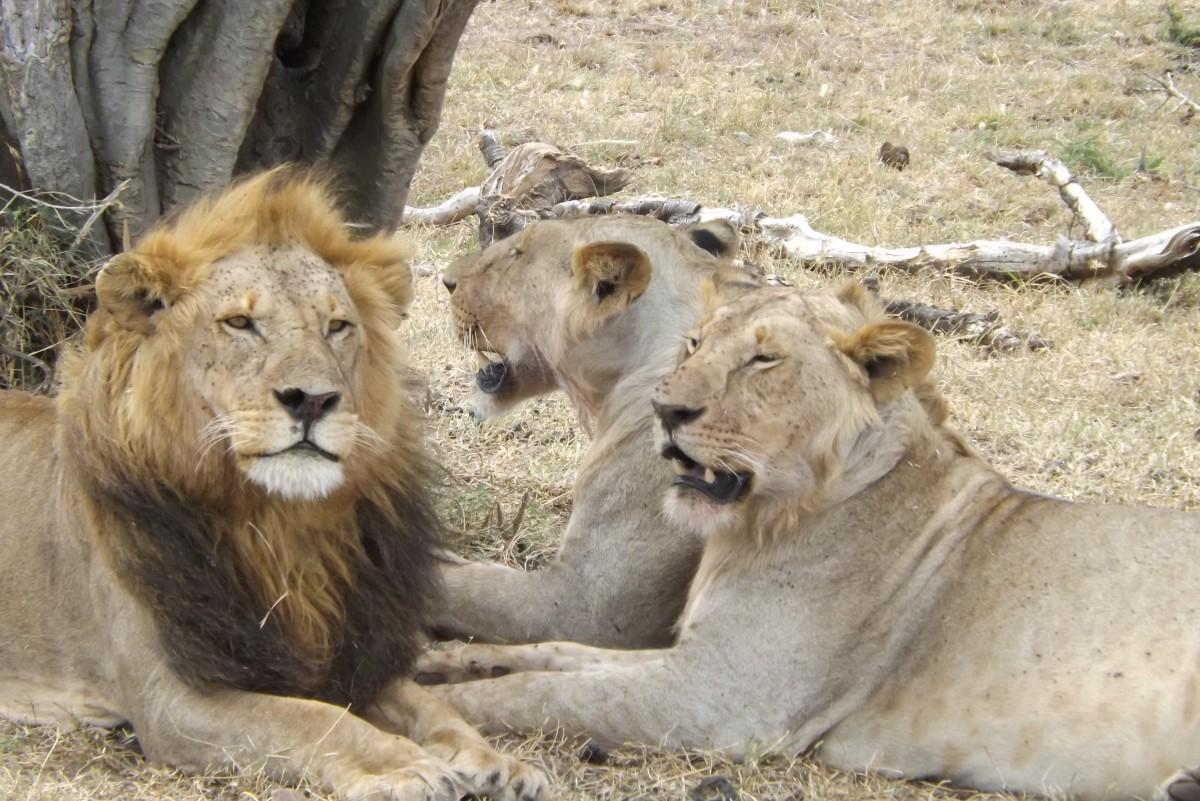 Zdjęcia: Kenia, -Kenia, kenia, KENIA