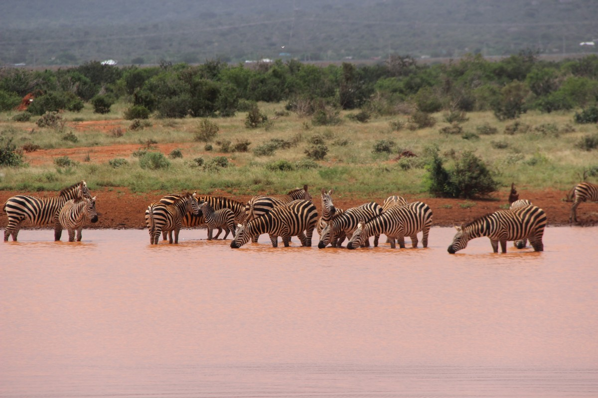 Zdjęcia: Tsavo, powitanie z Afryką, KENIA