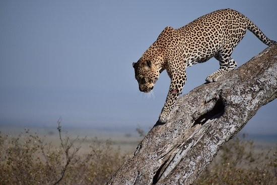 Zdjęcia: tsavo, coast, kenii safari, KENIA