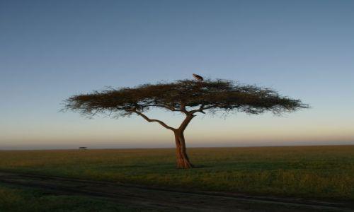 Zdjecie KENIA / - / Masai Mara / krajobraz po burzy...