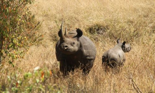 Zdj�cie KENIA / Masai Mara / Sawanna / Bezgraniczna Kenia