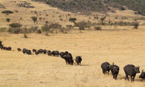 Zdjecie KENIA / Masai Mara / Sawanna / Kenia we wrześn