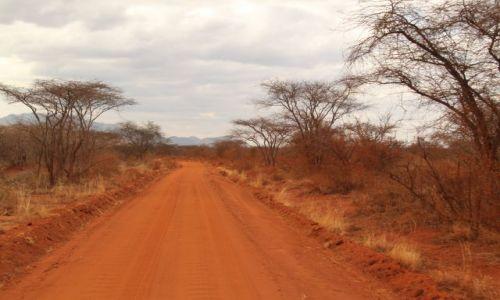 Zdjęcie KENIA / Tsawo / Sawanna / Kenia we wrześniu - 4 parki narodowe