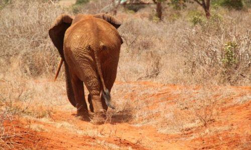Zdjecie KENIA / Tsavo / Tsavo National Park / Kenia we wrześniu - 4 parki narodowe