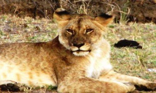 KENIA / brak / Amboseli / po obiedzie