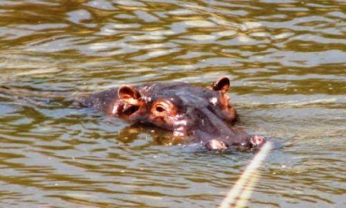 KENIA / brak / lake Boringo / cudowna woda...