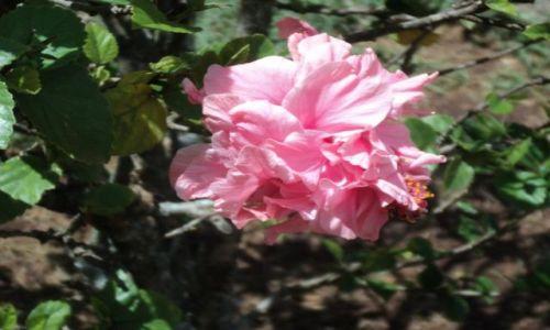 Zdjęcie KENIA / Nairobi / Uhuru Park / Kwiaty(3)