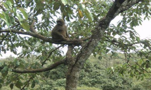 Zdjęcie KENIA / Nairobi / Safari Walk / Malpy(2)