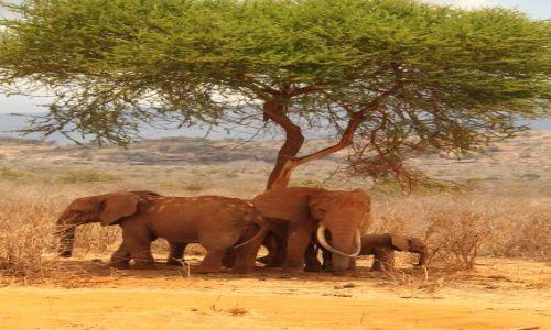 Zdjecie KENIA / Tsavo / Tsavo National Park / Trochę cienia...:-)