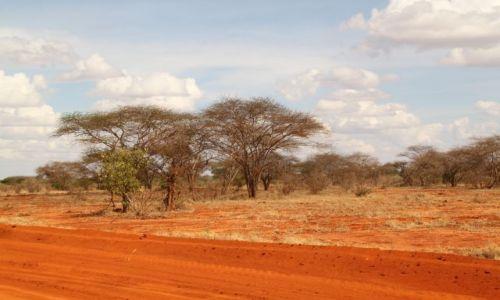 Zdjecie KENIA / Kenia / Tsavo National Park / czerowno