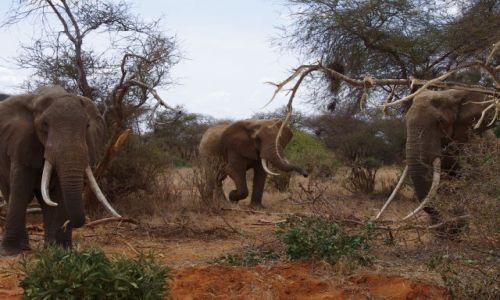 Zdjęcie KENIA / Park Tsavo / Sawanna / Zbiegowisko