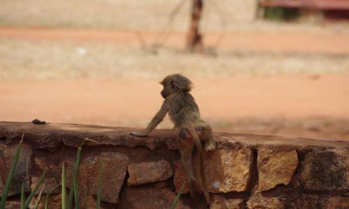 Zdjęcie KENIA / Park Tsavo / Sawanna / Przez murek