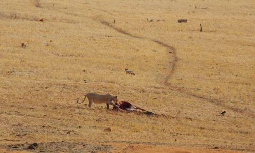 Zdjęcie KENIA / Park Tsavo / Sawanna / Znajdź 4 zwierzęta :)