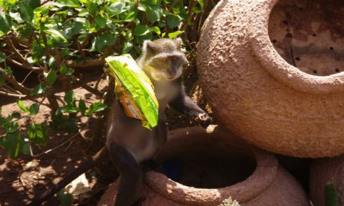 Zdjęcie KENIA / Diani / Afryka / Ktoś jeszcze chipsy ?
