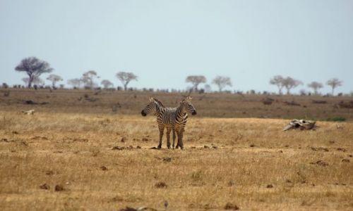 Zdjecie KENIA / Park Tsavo / Afryka / Dwugłowa ?