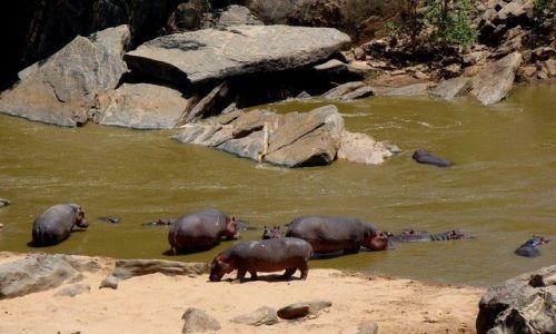 Zdjęcie KENIA / Tsavo / Galana river / Rodzinna kapiel