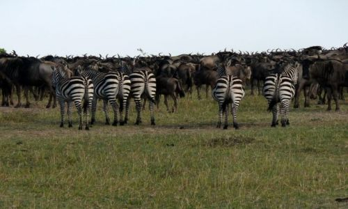 Zdjecie KENIA / - / Masai Mara / mamy was...