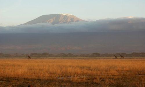 Zdjecie KENIA / Amboseli / Amboseli Park / Kilimanjaro w chmurach