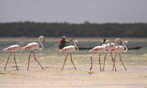 Zdjecie KENIA / Malindi / Mida Creek / Marzyłem o Afryce