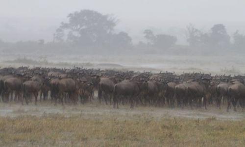 Zdjecie KENIA / MasaiMara / Masai mara / Ciągle pada...