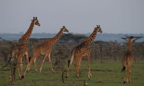 Zdjecie KENIA / Masai Mara / Masai Mara / bez tytułu