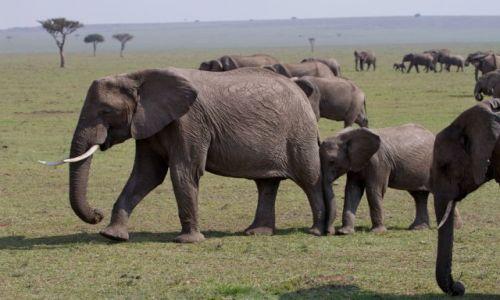Zdjecie KENIA / Masai Mara / Masai Mara / za mamusią raźniej