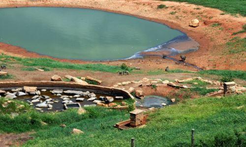 Zdjecie KENIA / Tsavo East / Tsavo National Park / malpy przy wodopoju