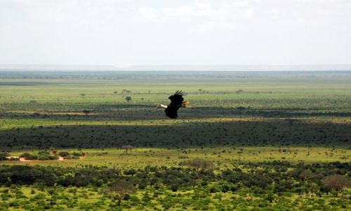 Zdjecie KENIA / Tsavo East  / Tsavo National Park / To Tu zimują!