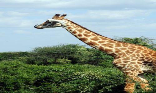 Zdjecie KENIA / Tsavo East / Tsavo National Park / no nie pokazuj!