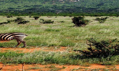 Zdjecie KENIA / Tsavo East / Tsavo National Park / poczekaj, nie odchodz!