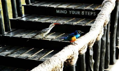 Zdjecie KENIA / Afryka Wschodnia / Salt Lick Lodge  / mind your steps...