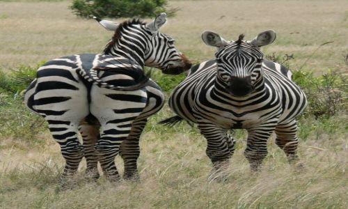 Zdjecie KENIA / Afryka Wschodnia / Amboseli National Park / 2 w 1