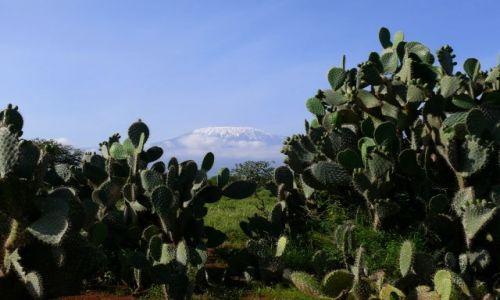 Zdjecie KENIA / Afryka Wschodnia / Amboseli / Kilimandżaro
