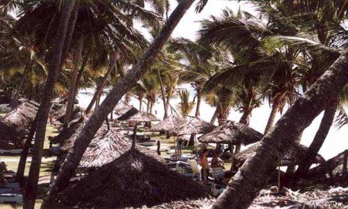 Zdjęcie KENIA / Soud Coast / Diani Beach / Kenia