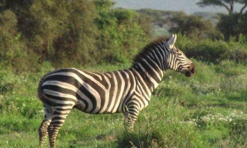 Zdjecie KENIA / - / Amboseli/Diani / spełnione marze