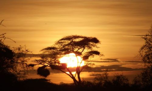 Zdjecie KENIA / - / Amboseli/Diani / Spełnione marzenia! III