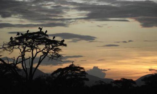 Zdjecie KENIA / - / Amboseli/Diani / Sełnione marzen