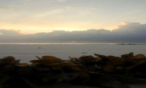 Zdjęcie KENIA / Diani / Beach / wszystko przez algi