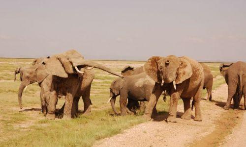 Zdjecie KENIA / - / Kenia / Słonie