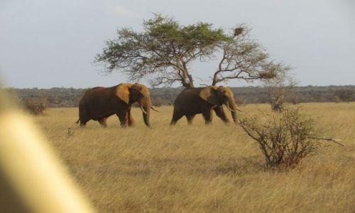 Zdjecie KENIA / Południowo-wschodnie sawanny / Safari Tsavo East / Kenia