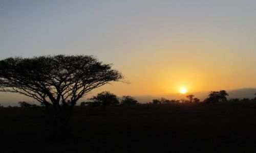 Zdjecie KENIA / TSAVO / Safari Tsavo East / beautiful
