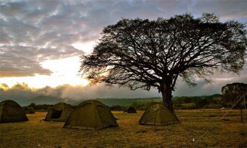 Zdjecie KENIA / AFRYKA / Park Serengeti / Wsch�d