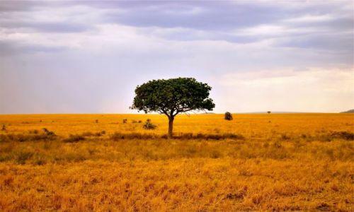 Zdjecie KENIA / AFRYKA / Park Serengeti / Afryka